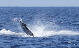 08-deep-sea-marlin-fishing-unreel-watamu-kenya-coast-38.jpg