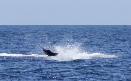09-deep-sea-marlin-fishing-unreel-watamu-kenya-coast-41.jpg