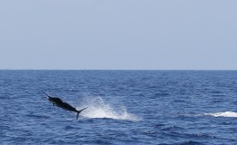 11-deep-sea-marlin-fishing-unreel-watamu-kenya-coast-48.jpg