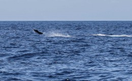 12-deep-sea-marlin-fishing-unreel-watamu-kenya-coast-51.jpg