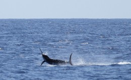 16-deep-sea-marlin-fishing-unreel-watamu-kenya-coast-66.jpg
