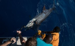 20-deep-sea-marlin-fishing-unreel-watamu-kenya-coast-7.jpg