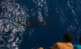 24-deep-sea-marlin-fishing-unreel-watamu-kenya-coast-11.jpg