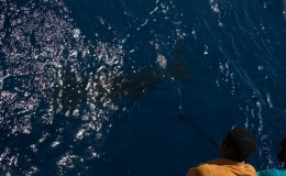 25-deep-sea-marlin-fishing-unreel-watamu-kenya-coast-12.jpg