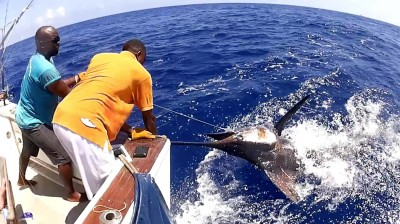 Blue Marlin tag and release, Unreel Fishing Kenya, Watamu