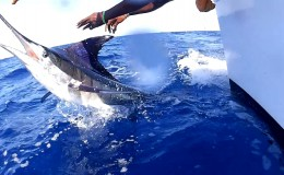 42-striped-marlin-deep-sea-marlin-fishing-unreel-watamu-kenya-coast-102.jpg